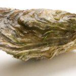 Pourquoi les coquilles d'huitres devrait être recyclés