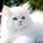 4 conseils essentiels pour le toilettage de votre chat